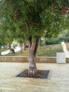 Irena_sendler_tree
