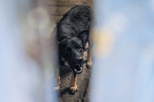Perros y gatos abandonados en una fabrica desalojada de La Boca