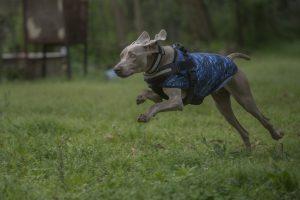 Bruno, perro de rastreo